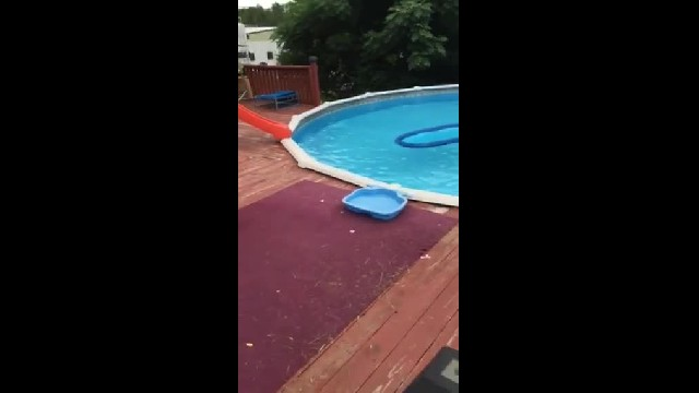 Armadillo found chillin' in pool and in no hurry to leave