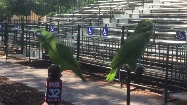 2 birds interrupt their interview by breaking out into song