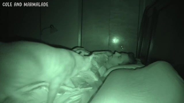 Man is trying to sleep, but when his two cats come inside the room – the camera records everything t