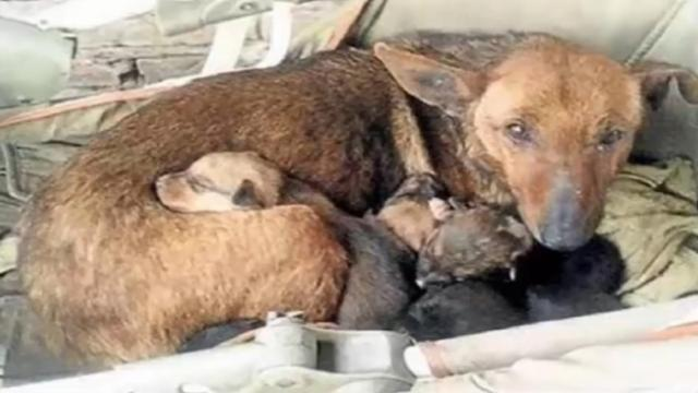 Woman sees a stray dog with 6 puppies, looks closer and spots tiny hand sticking up