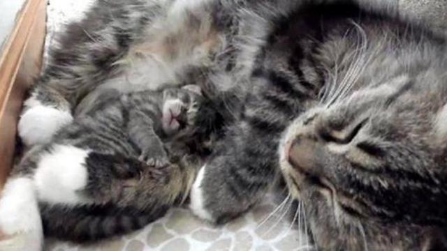 Kitten born 4 days after others, never leaves cat mother's side, now 4 months later.