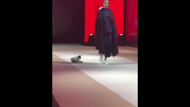 Adorable kitten crashes cat walk — and picks a fights with the models