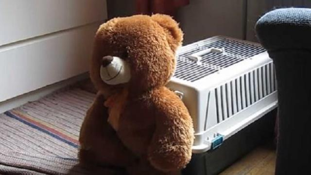 Dog drags teddy bear inside kennel in adorable viral video