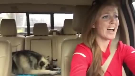 Mom's driving down the road, but it's the dog in the backseat you'll want to pay attention to
