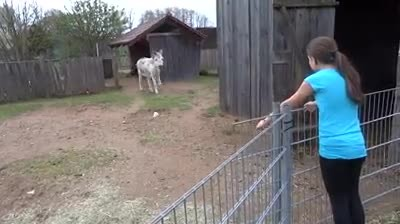 "She walks up to this donkey to say ""hello"", now listen the donkey's reaction…oh my!!"