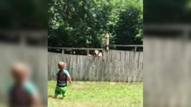 Little boy throws ball over fence but new best friend keeps dropping it back over to him