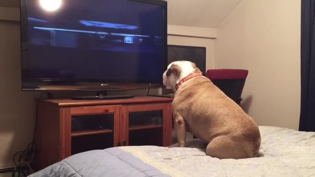 Bulldog Takes Watching A Horror Flick To The Next Level When He Finally Sees The Villain