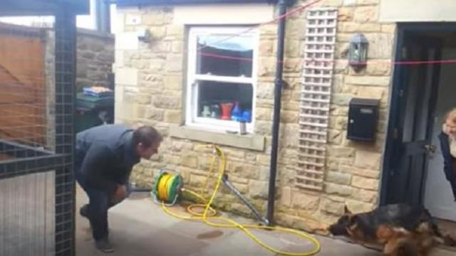 German shepherd brings all to tears with emotional reaction