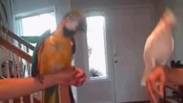 Music comes on - then birds engage in epic dance off that has internet dying of laughter