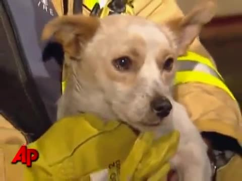 Firefighters rush into burning house and find dog. Let out gasp when they look under him