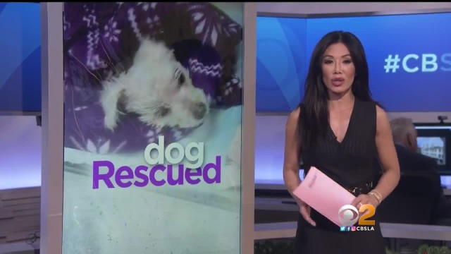 Dog nearly beaten to death, found whimpering in trash bag