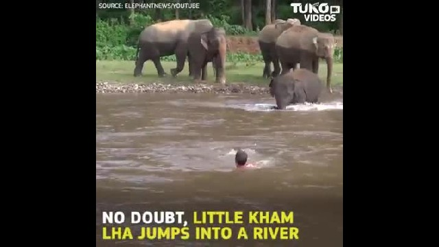 Baby elephant caught rushing into gushing river to rescue a man in Thailand