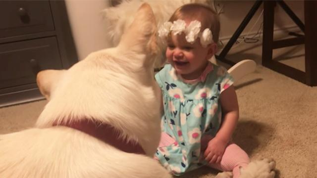 Dog gently returns kisses from baby girl