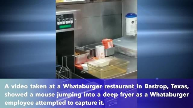 Video shows mouse jumping into deep fryer at Whataburger restaurant in Bastrop, Texas
