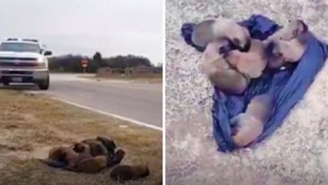 Trash bag of puppies tossed out of car, found on side of road and rescued