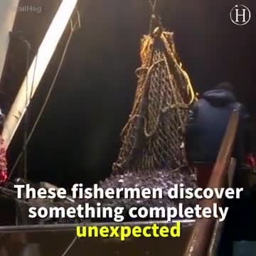 Sea Lion Gets Caught in a Full Fishing Net, Eats All the Fish and Refuses to Leave the Ship