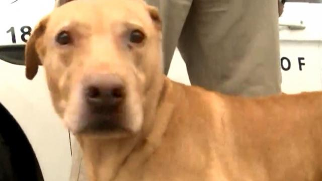 K-9 left at animal shelter reunited with the man who trained him