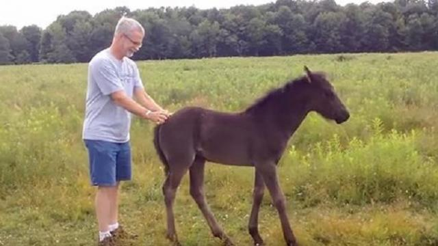 Tiny foal won't leave man after getting petted only to pull stunt that has everyone doubled over
