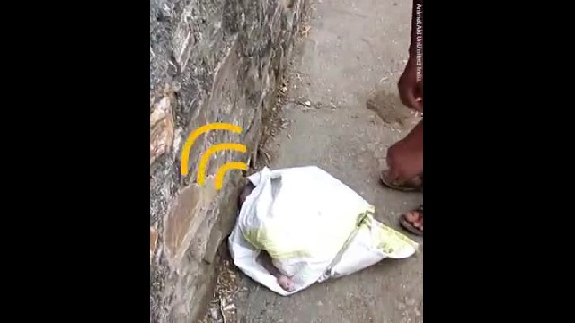 Passersby hear muffled cry from trash bag in street, when they open it up, they recoil in horror