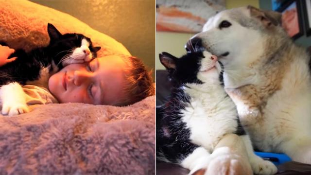 Family adopted a 20 year old cat from the shelter, never expected how much love he had left to give