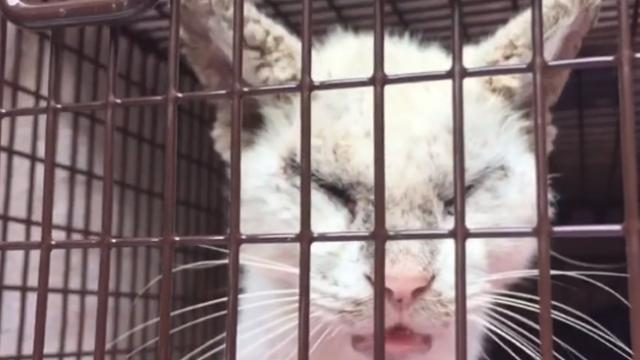 Homeless cat opens its eyes for the first time in months, stuns everyone with their beauty
