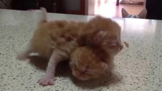 Mama cat sees her kittens fighting, breaks up the fight in the cutest way possible
