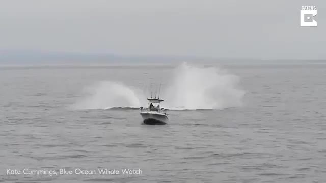 Giant humpback whale leaps from the sea next to tiny fishing boat