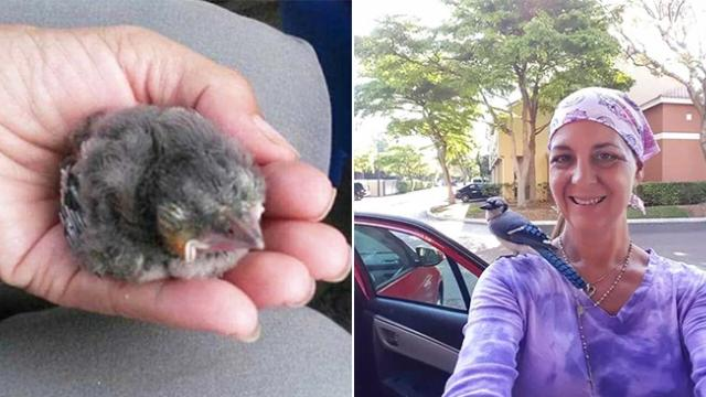 She rescued a baby bird and named it Gracie. Three years later, Gracie returns kindness and helps he