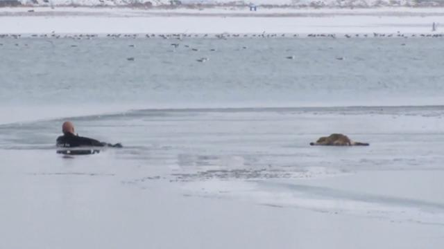 Officer swims through frigid water and smashes ice to save puppy trapped on frozen lake