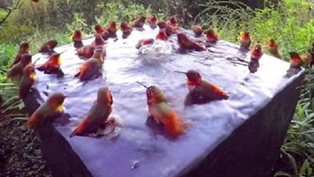 Camera focused on bird bath captures incredible footage of 30 hummingbirds - now it's going viral