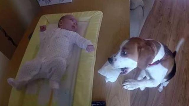 Amazing dog helps to change baby's diaper