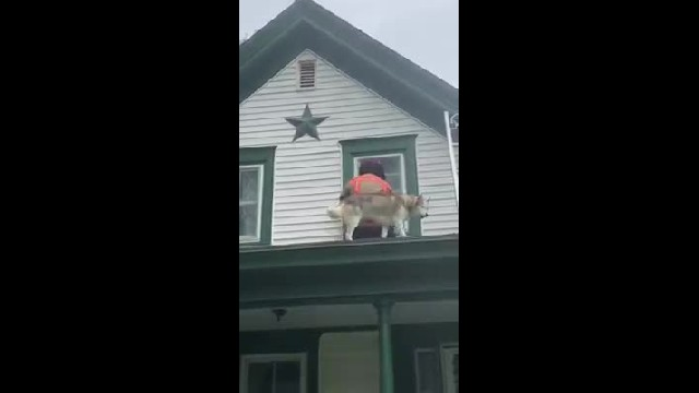 Firefighter Rescues Husky From Roof, Then Pup Thanks Him In The Cutest Way