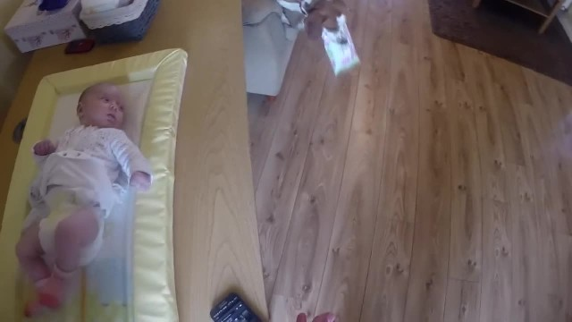 Cute Dog Helps Mom Change Baby's Diaper