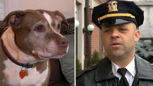 Pit bull leads cops to gas-filled house, saves mom and toddler