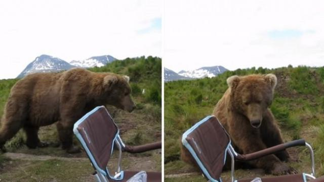 Wild brown bear surprises unsuspecting man by sitting next to
