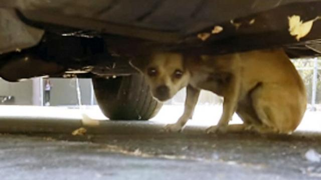 Woman finds stray cowering near busy street & calls in reinforcements.