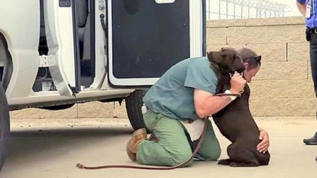 When this prisoner says goodbye to the dog he raised, it brought everyone to tears.