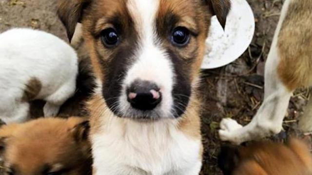 These puppies from Chernobyl are getting new homes with families in the U.S. and Canada