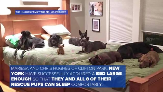 Couple Builds Giant Bed So All 8 Of Their Rescue Dogs Can Sleep With Them