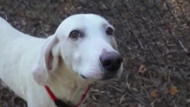 Dog Returned To Shelter 11 Times, Before Staff Realizes He's Already Found His Forever Home