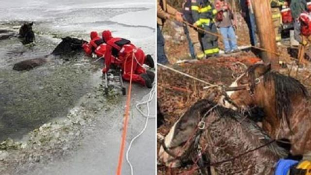 Farmer spots two Clydesdale horses trapped in frozen lake, thats when the dramatic rescue unfolded