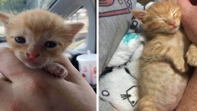 Woman saves kitten from middle of road when others just keep driving