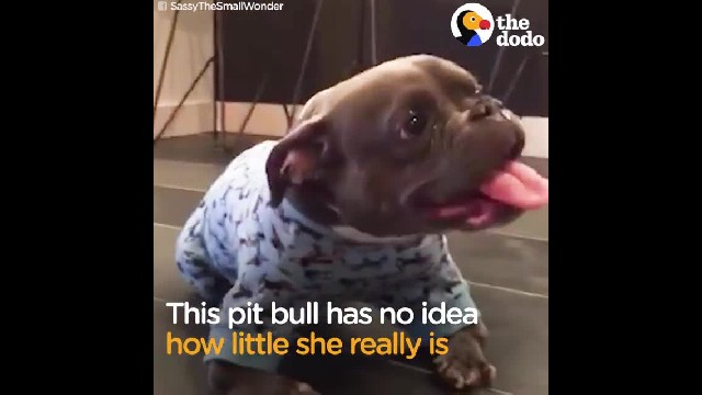 "Pit Bull Was Dumped Because Of Her ""Ugly"" Looks, Finds A Dad Who Cherishes Her"