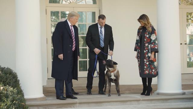 President Trump Gives Award to Heroic Conan the Dog