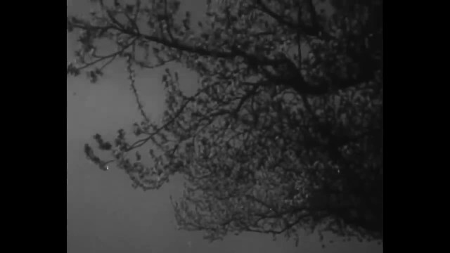 Spaghetti grows on tree? Watch the news report that convinced thousands it does