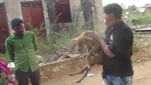Injured and starving, dog had slim chance of surviving until some big-hearted people came along