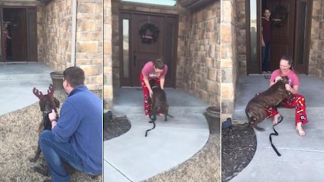 Parents surprise daughter with shelter dog she fell in love with while volunteering