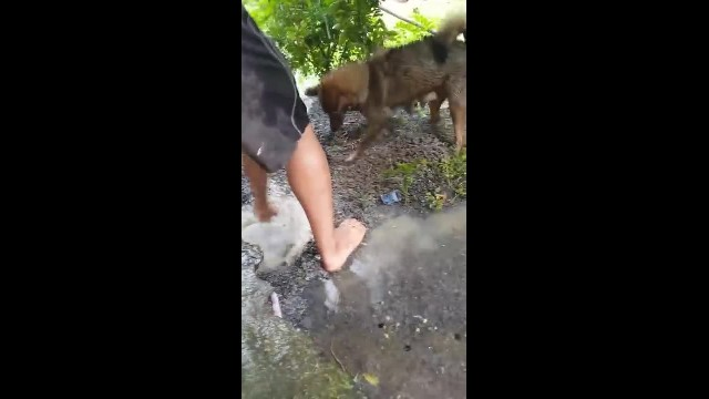 Dog sees 'home' submerged in water—so she squeezes into flooded den to scoop out her pups