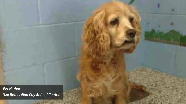 Elderly dog breaks down in tears at shelter after family leaves her for younger puppy