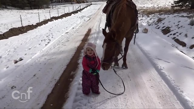 Little girl walking horse in snow gets stuck but it's horse's action that's melting hearts everywher